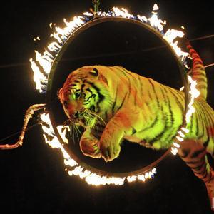 Цирки Домбая