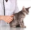 Ветеринарные клиники в Домбае